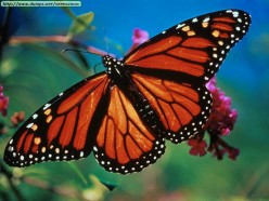 The Gentleness of a Butterfly