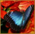 Butterflies - Winged Wonders - A Gift of Nature