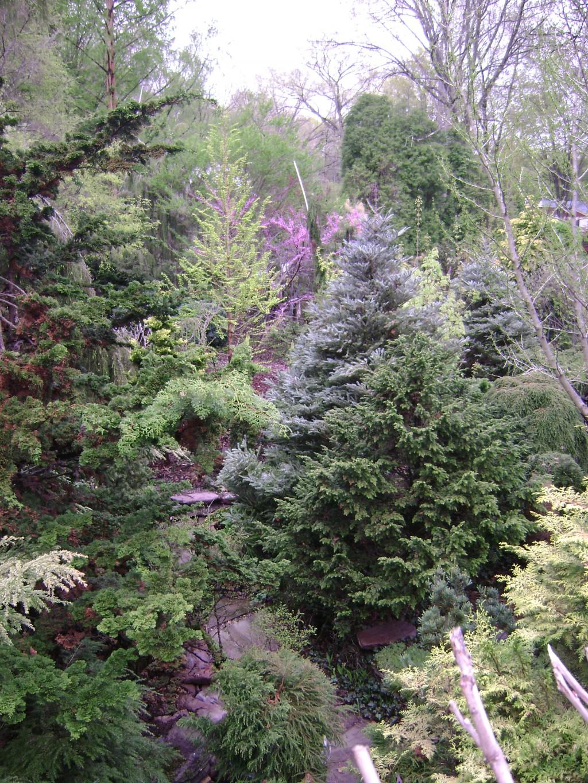 Landscape Boulders South Jersey : Garden tour iii let s talk about the plants conifers flowers blue