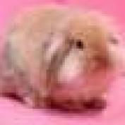 rachel kkk profile image