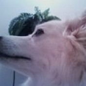 Klondike0723 profile image