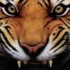 ericndrsn profile image