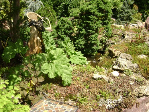 Juniparis 'Nana' all grown up.  The Rhubarb decides to make a home by the pond.  The sedum riddles the tufa rock