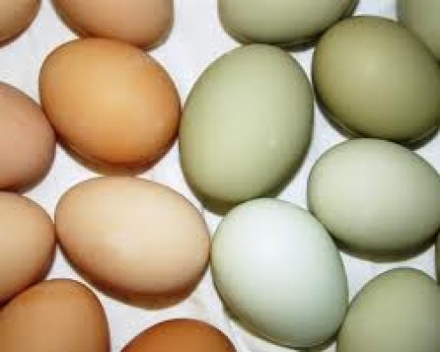 Eggs of all colors make a super high protein food source!