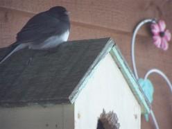 Bird Watching In Our Backyard 2
