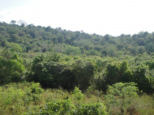 Lush scenery, the Sri Lanka trademark