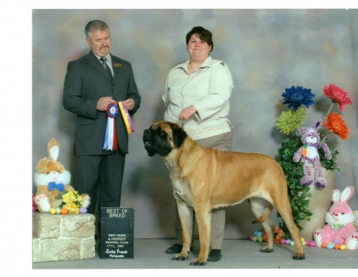Dick's daughter, DiDi winning best of breed and her championship. Didi later returned to us and came with me to Florida. Unhappily, she died last year of a stroke.
