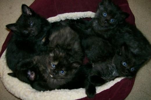Momma's Kittens