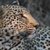 Rajab Nsubuga profile image
