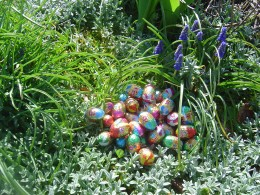 A treasure trove ov eggs amongst the tulips