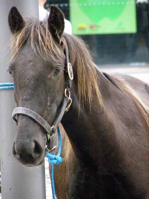 Sound: An alert bay horse pricks its ears