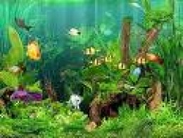With a little imagination and creativity you will be able to take your basic freshwater aquarium and make it look just as good or better, than the one shown in this photo.