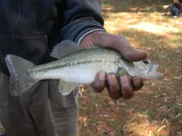 One of the employees catch of the day. A small wide mouth bass!