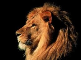 The King of Judah is often referred to as the Lion of the Tribe of Judah