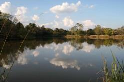 Peace in Suburbia – Struben Dam, Pretoria