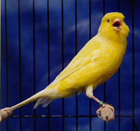 Don't be fooled by their small size. A canary might be your best friend if Taffy crashes and burns!