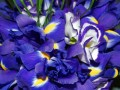 Three Best Iris Perfumes For Women and Men