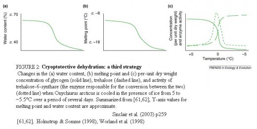 Cryoprotective dehydration - a third strategy