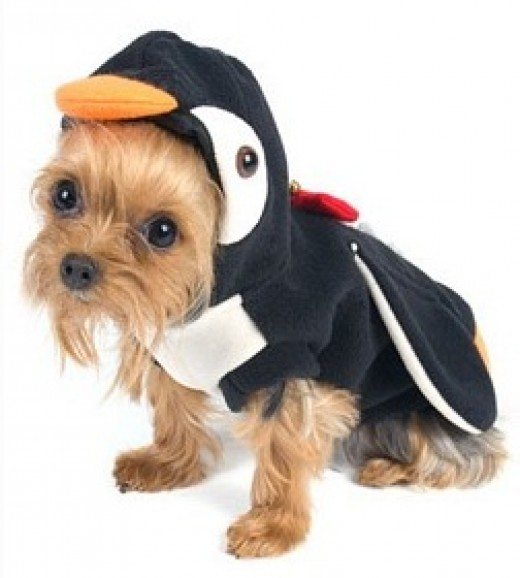 Teenie Weenie the Yorkie dressed in an adorable animal small dog costumes for 2014