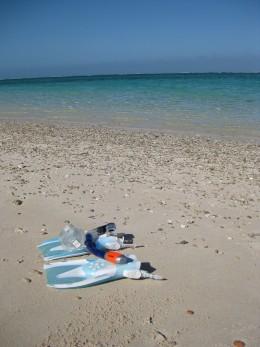 Snorkeling at Ningaloo Reef WA