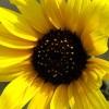 ciaobella24 profile image