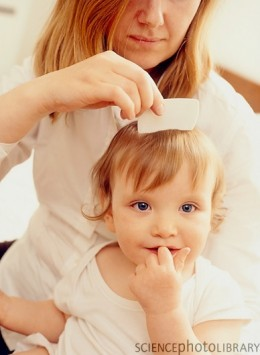 removing head lice on young children