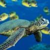 animal savers 101 profile image