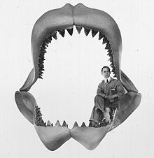 Here you can get a rough idea of how big one of these prehistoric  sharks were. As you can see by this photo, a full-grown man could have been swallowed whole by one of these monsters of the deep.