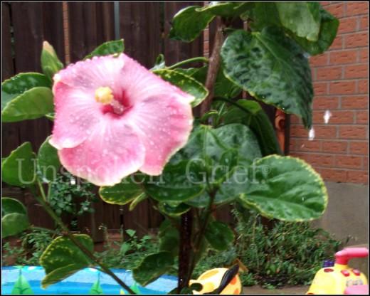 Triton's plant