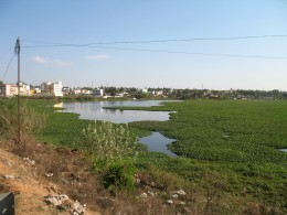 95% of the 500 acres of lake filled with weeds.The Lake in the Highway near DARGAH of Hosur will soon be gone.
