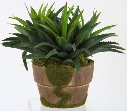 """This """"cheater's"""" moss pot contains an easy-care star succulent."""