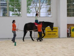 Horse Therapy: Equine Facilitated Learning For ADHD and Autism
