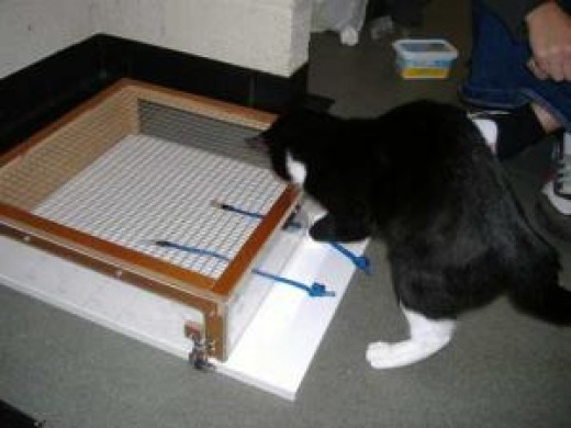 A cat grappling with the complexities of string theory.  Image from The New Scientist website.