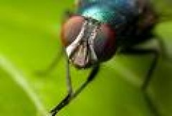 What insect creeps you out the most in life?