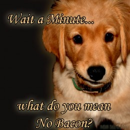 Dogs don't want you to know that you should not feed them Bacon!