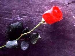 Roses whisper love.
