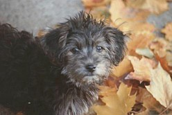 My Sweet Little Rescue Dog