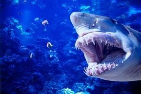 The Giant Megalodon Shark, was not only large predatory shark, that roamed the warmer temperate oceans, but as you can see in this artist rendition. Its teeth alone, made this beast a ferocious looking sight to add!