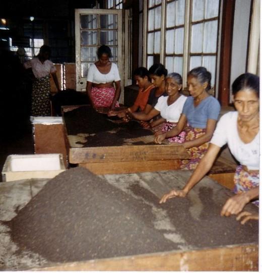 Tea sorting