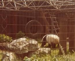 Chia Chia (m), London Zoo, Regents Park