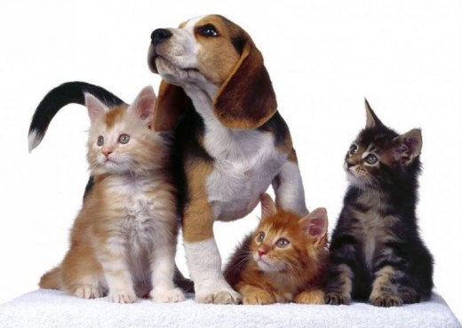 cats and dog By bettyboop6896, source Photobucket - Adopt a pet, save a life