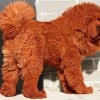 A Puppy Sells for $1.5 Million - Dollars for Dogs - How Much Is That Doggy in the Window?