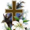 chiem1121 profile image