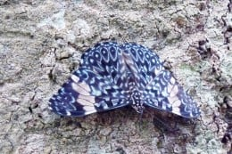 A beautiful blue patterned butterfly