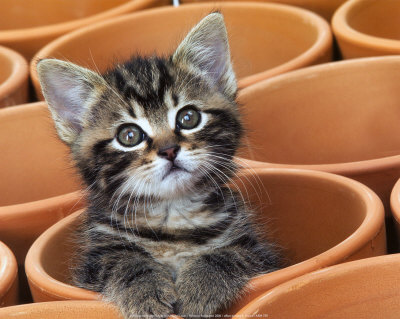 And some people need as much attention as this little kitty cat, and that is no good either.