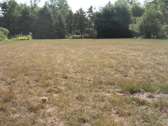 Your lawn may look dreadful after the second trim.  Give it patience and it will recover.