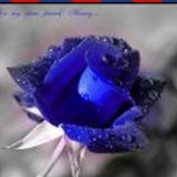 Fozia Arif profile image