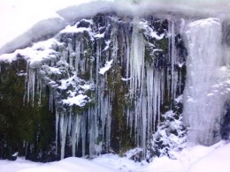 Beautiful mossy icicles left from an early thaw
