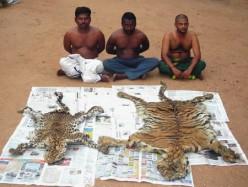 Top 5 Animals That Face Extinction-Satisfying Human Greed-Some Shocking Revelations !