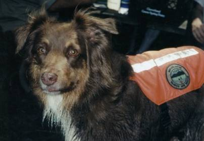 Morning Glory  Dec 1994 - April, 2007    Background: Air Scent Search Dog in wilderness - lost person; cadaver, land & water; and evidence. Pentagons Evidence Recovery Unit (2001) in the aftermath of a terrorist act and College Park,, MD F-3 tornado